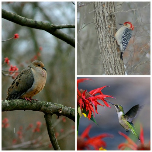 dove woodpecker hummingbird