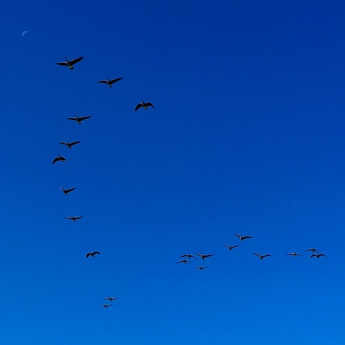fall geese flying collaboration