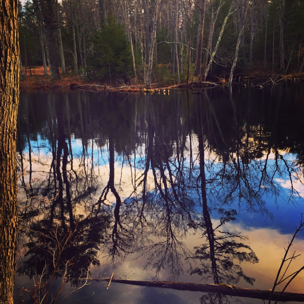Forest lake in Maine